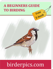 Free Ebook - A Beginner's Guide To Birding